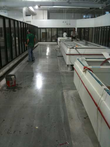 Comconcrete Flooring Miami : Concrete Polished Floor: Polished Concrete Miami